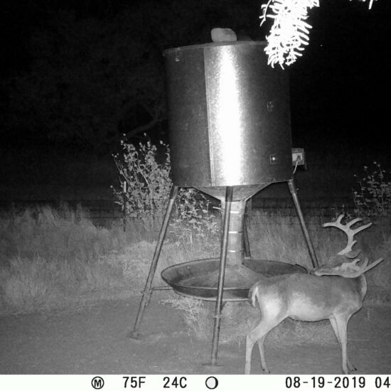 Texas Deer Trail Cam