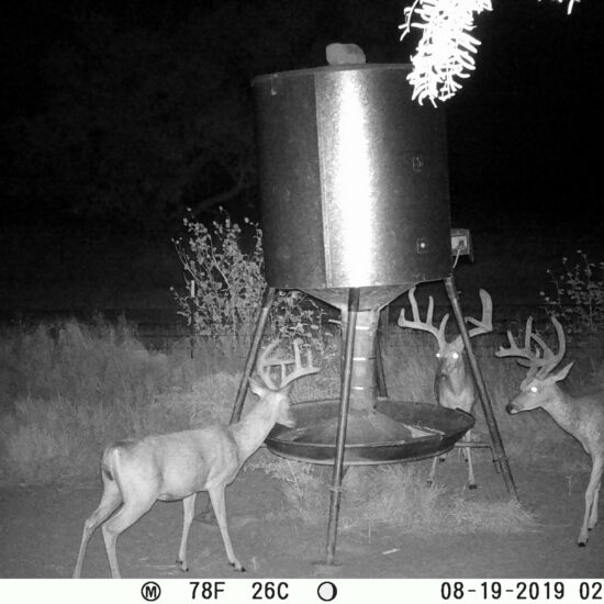 Texas Whitetail Feeder