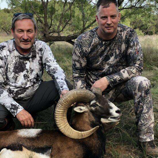 Mouflon Sheep Hunt in Texas